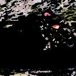 Nya KTM 250-300 EXC TPI – världens första tvåtaktsenduro med insprutning